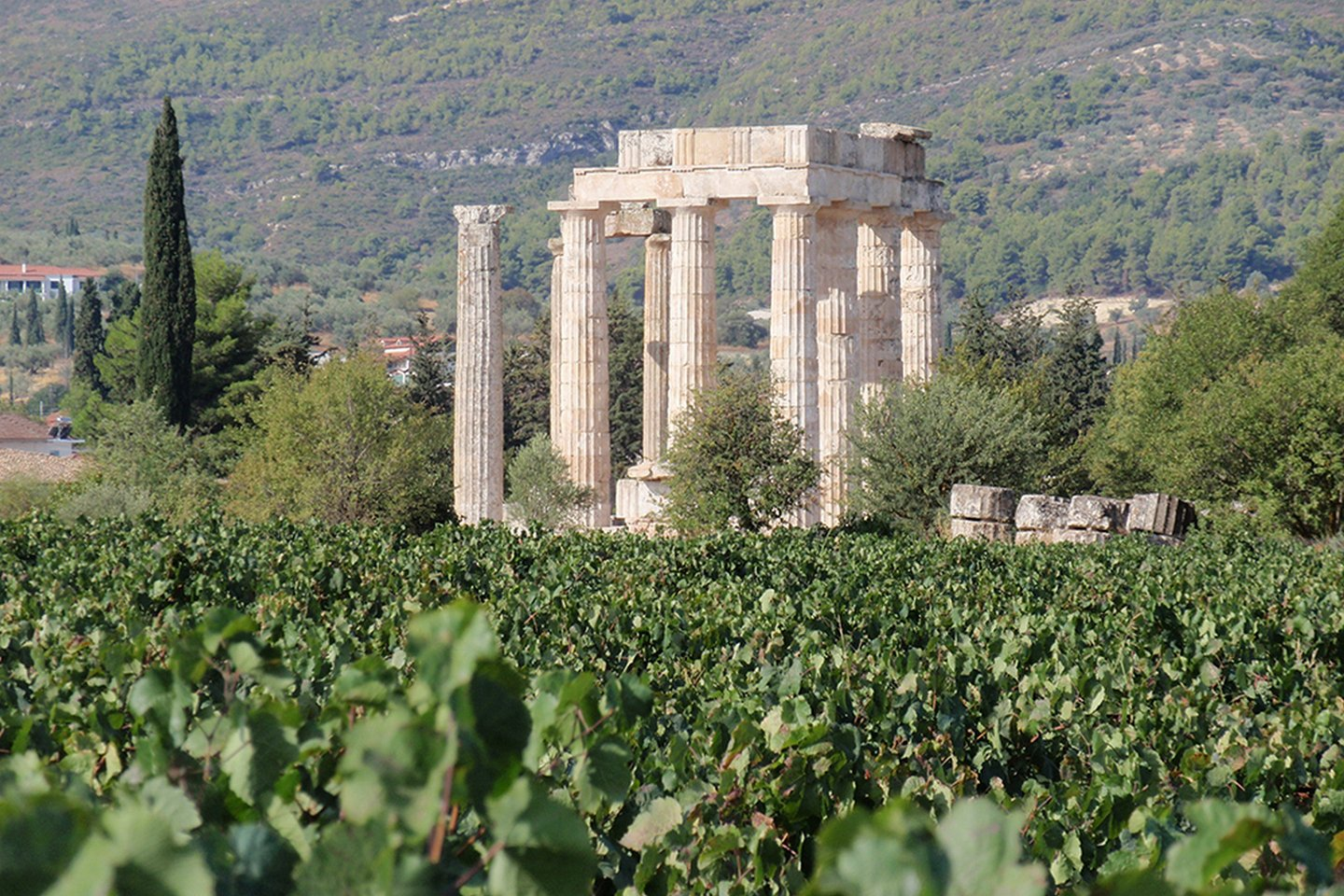 Nemea wineries, Greece